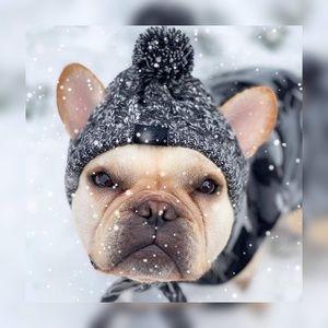 CANADA POOCH Dog Polar Pom Pom Hat